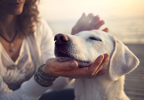 Omgaan met je hond